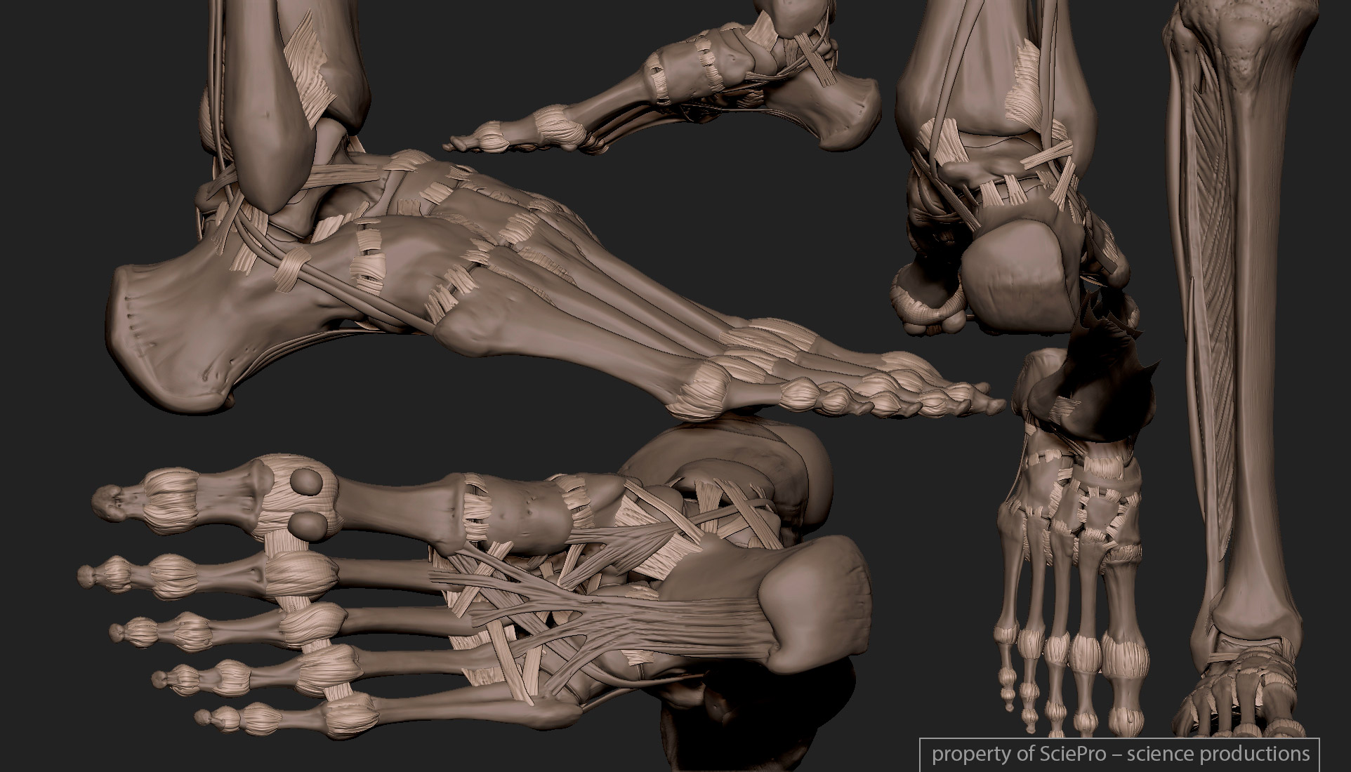 2016.01.01  medicaly acurate average human skeleton 3D model,with all important anatomical landmarks